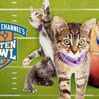 Kitten Bowl 2016 - Adoption Special and Family Event