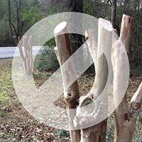Stop Crape Mder - Pruning for Form Workshop