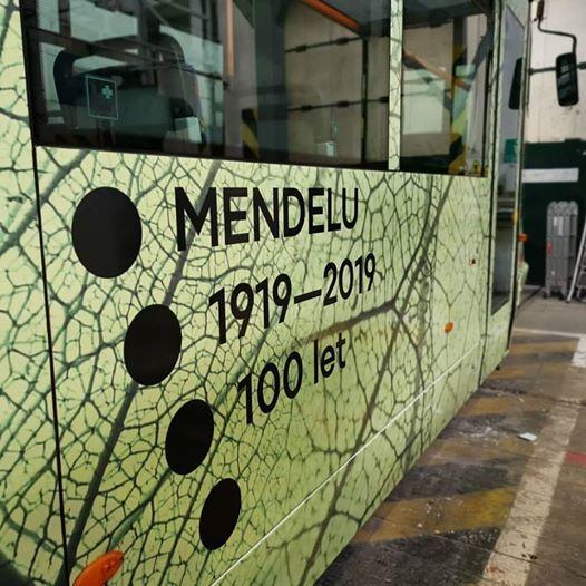 Kest aliny Mendelu