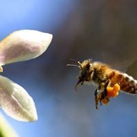 valley potluck and annual meeting with ann arbor backyard beekeepers