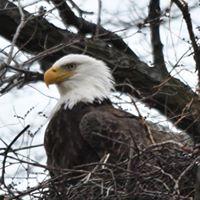 Eagle Watch Van Trip
