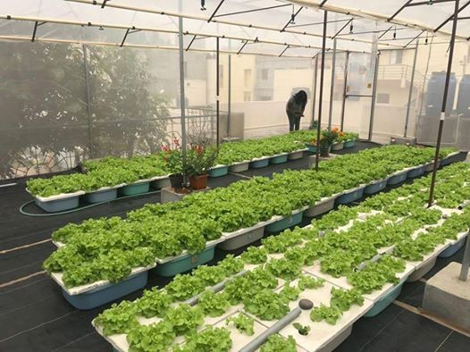 Hydroponics One Day Workshop-Registration is MUST Limited seats
