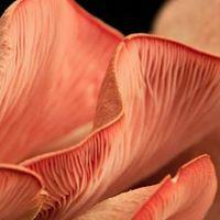 Bunbury Mushrooms to Mushrooms Workshop