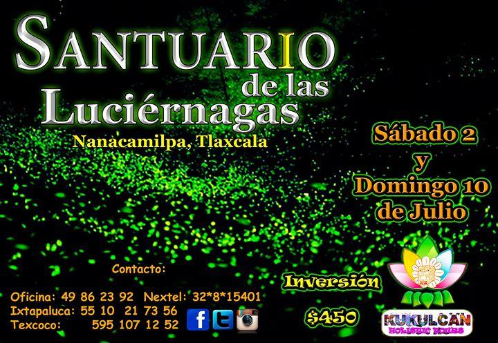 Maravilla nocturna en el santuario de las luciernagas at for Espectaculo de luciernagas en tlaxcala