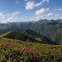 Erbe e sapori della montagna