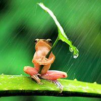 Frog &amp toad shelter making workshop