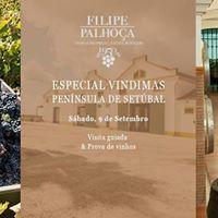 Adegas de Portas Abertas - Filipe Palhoa