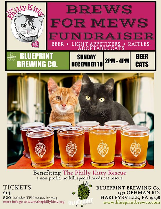 Brews for mews fundraiser for the philly kitty rescue at blueprint brews for mews fundraiser for the philly kitty rescue malvernweather Gallery