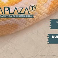 TerraPlaza Gyr 5. - international terraristic &amp aquaristic expo