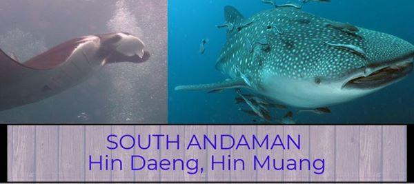 5d4n Hin Daeng Hin Muang Live on Board