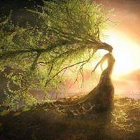 Taller de meditacin y danza La sabidura de los rboles