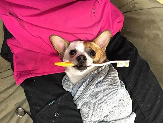 Kissable K9 Cosmetic Teeth Cleaning Clinic