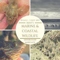 Kents Marine &amp Coastal Wildlife - Exhibition (co Margate VIC)