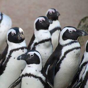 Pinguine auf (R)eisen