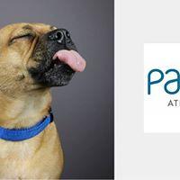 Pet Photo Shoot Fundraiser for PAWS Atlanta