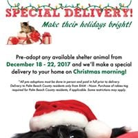 Pet Christmas Delivery