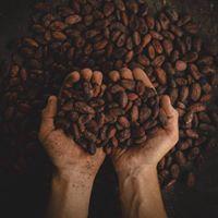 Cacao Kirtan