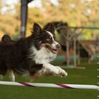 Introduction to Agility Class