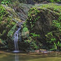 Waterfalls &amp Hummingbirds