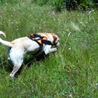 Scent-Search Class- 4 weeks