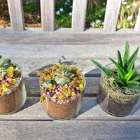 Succulent Terrariums Indoor Mini Gardens