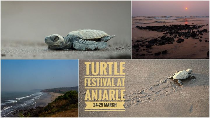 Turtle Festival at Anjarle