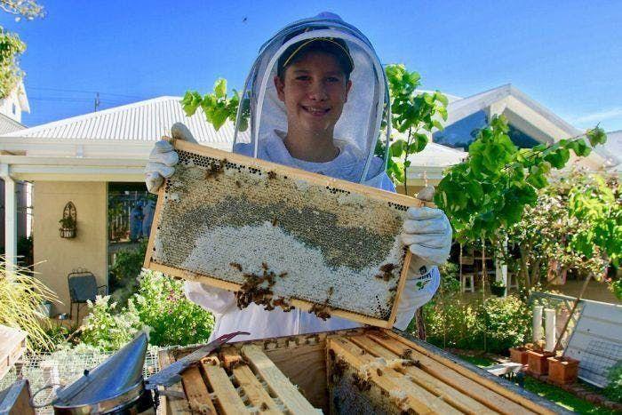 Beekeeping in the Burbs