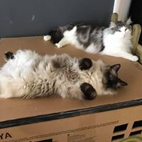 Yoga at Cat Cafe