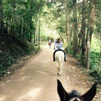 Roteiro rural equestre