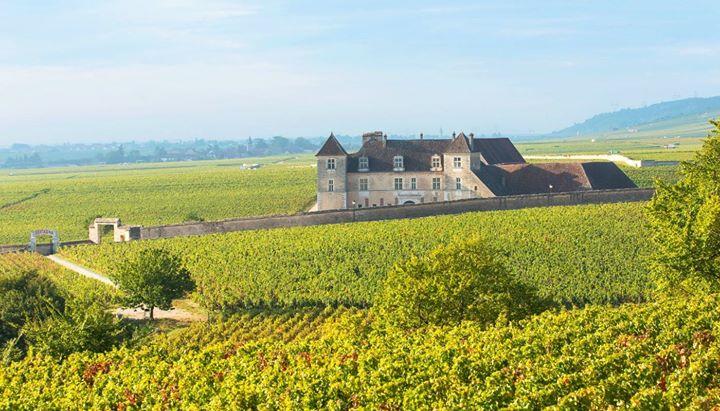 Burgundy Chardonnay intoarcerea la origini