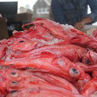 Volunteer Info Session - Seafood Demos