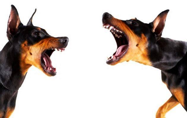 Dealing with Your Reactive Dog Seminar
