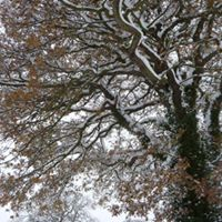 Save Dore Totley and Bradway Trees Meet Up