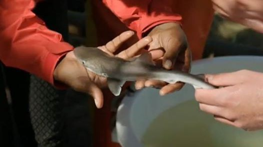 Shark Conservation Specialty