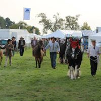 Trimpley Heavy Horse Festival