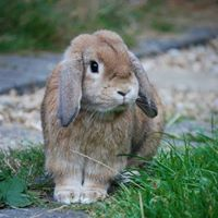 Rabbit vaccination clinic - Hythe