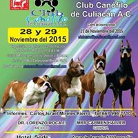 Expo Culia-Can 2015      AREA DE PISTAS ABIERTA