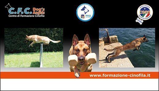Preparazione Atletica Del Cane Sportivo E Non Solo At Dogs