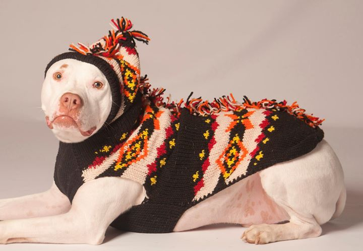 pitbull rescue cyprus annual ugly christmas sweater cocktail party