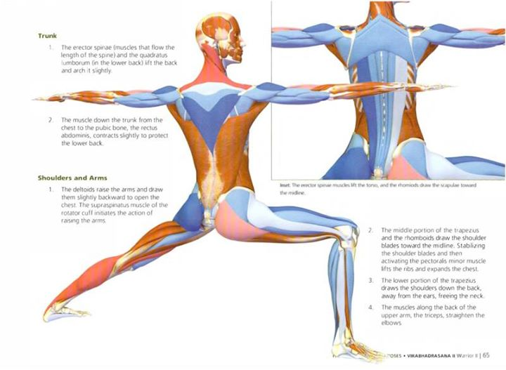 Yoga Anatomy: Lower Back & Hips at Paragon Personal Training ...