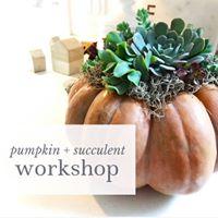 Pumpkin and Succulent Arrangement