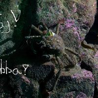 Bild vising o party krabba