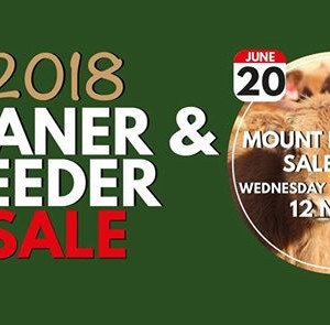 CCSales Weaner and Feeder Sale