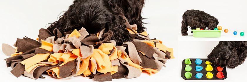 Hersenwerk voor honden - priv workshops bij Canine Care