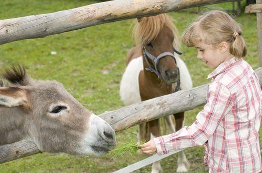 Junior Animal Keeper Day