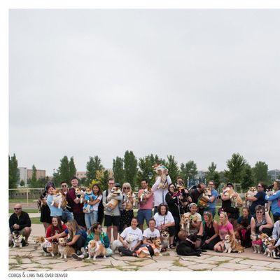 Corgis and Friends Take Over Denver