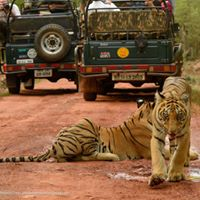 Tadoba wildlife Safari Tour