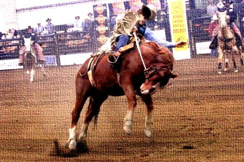 Image result for clash of the cowboys, benton county fairgrounds