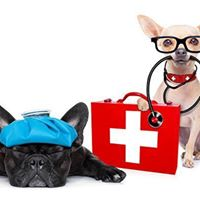 Pet First Aid &amp CPR class