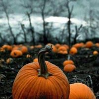Halloween  Maggie Meyers